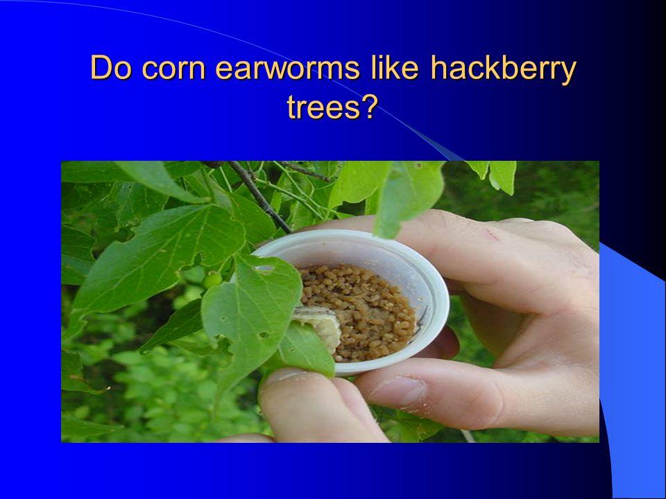 Do corn earworms like hackberry trees?