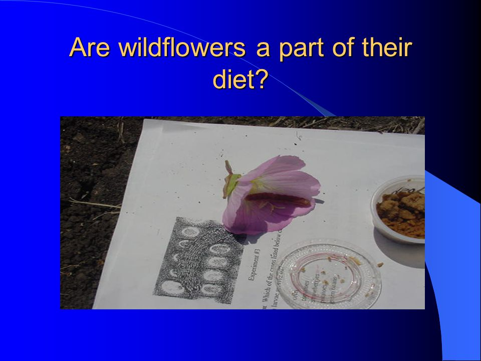 Are wildflowers a part of their diet