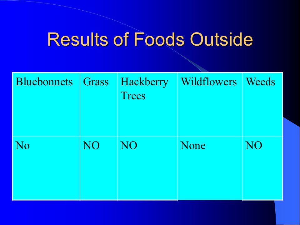Results of Foods Outside BluebonnetsGrassHackberry Trees WildflowersWeeds NoNO NoneNO