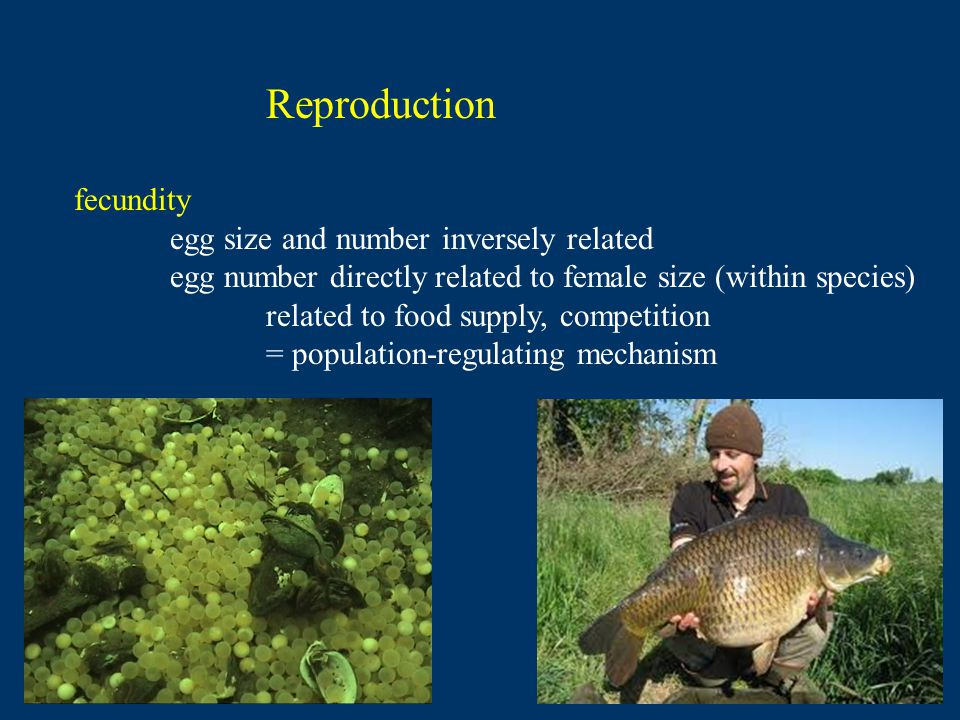 Reproduction fecundity egg size and number inversely related egg number directly related to female size (within species) related to food supply, competition = population-regulating mechanism