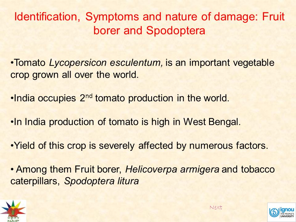 Tomato Lycopersicon esculentum, is an important vegetable crop grown all over the world. India occupies 2 nd tomato production in the world. In India