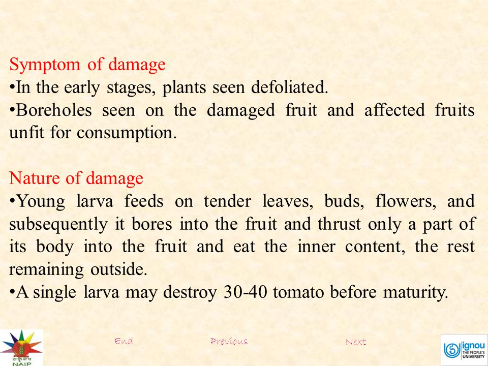 Symptom of damage In the early stages, plants seen defoliated. Boreholes seen on the damaged fruit and affected fruits unfit for consumption. Nature o