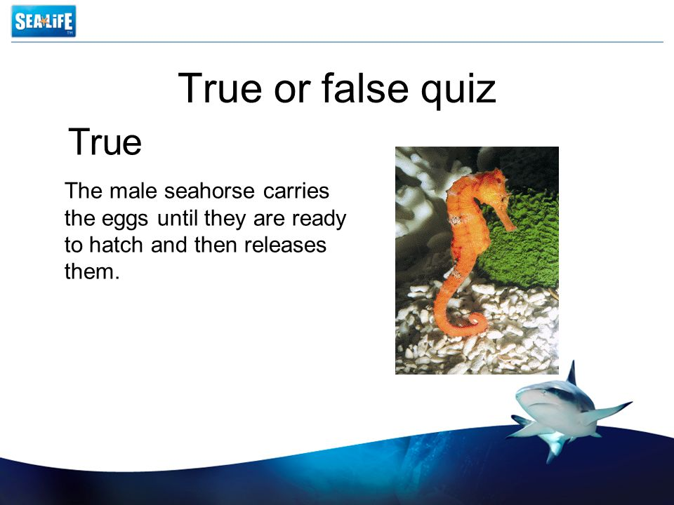 True or false quiz The male seahorse carries the eggs until they are ready to hatch and then releases them.