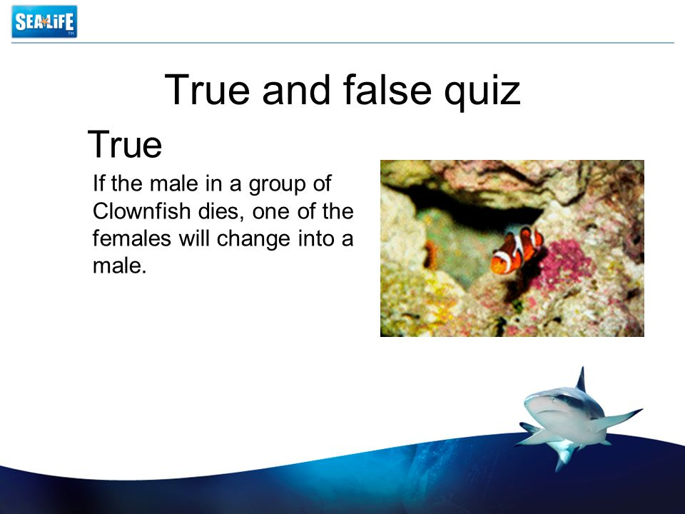 True and false quiz If the male in a group of Clownfish dies, one of the females will change into a male.