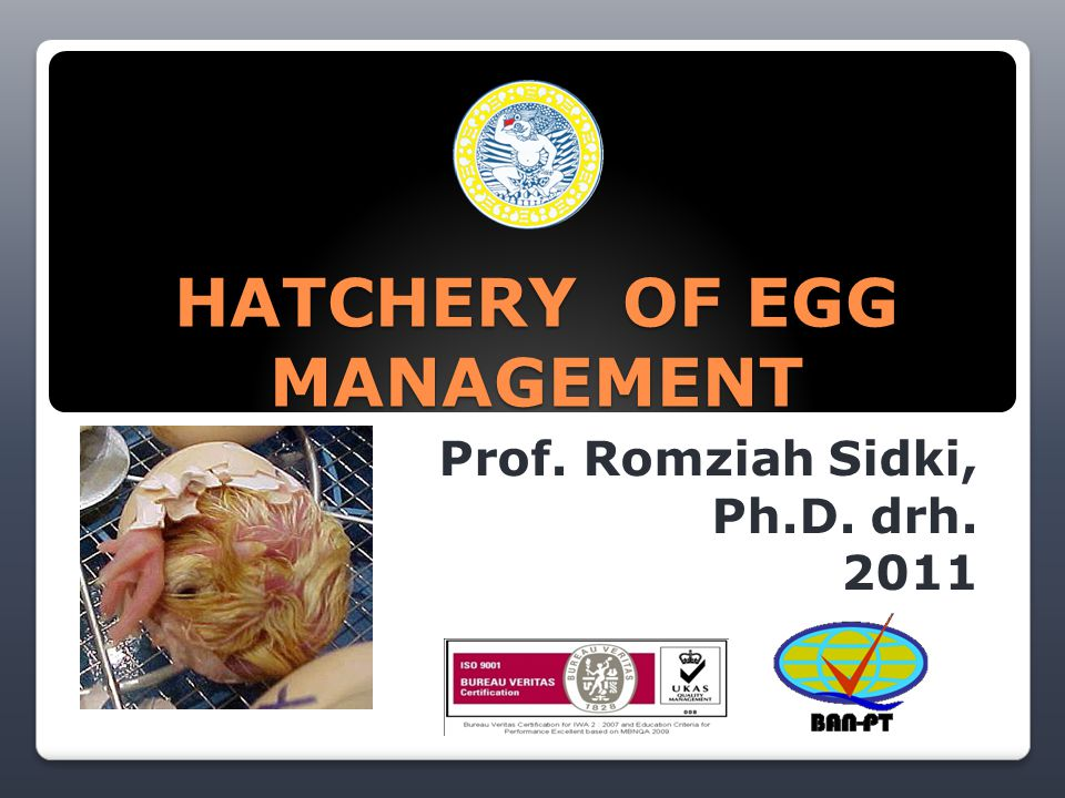 HATCHERY OF EGG MANAGEMENT Prof. Romziah Sidki, Ph.D. drh. 2011