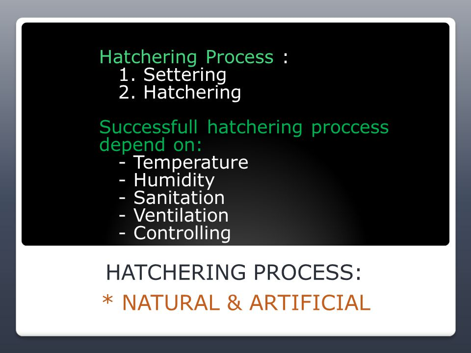 HATCHERING PROCESS: * NATURAL & ARTIFICIAL Hatchering Process : 1.
