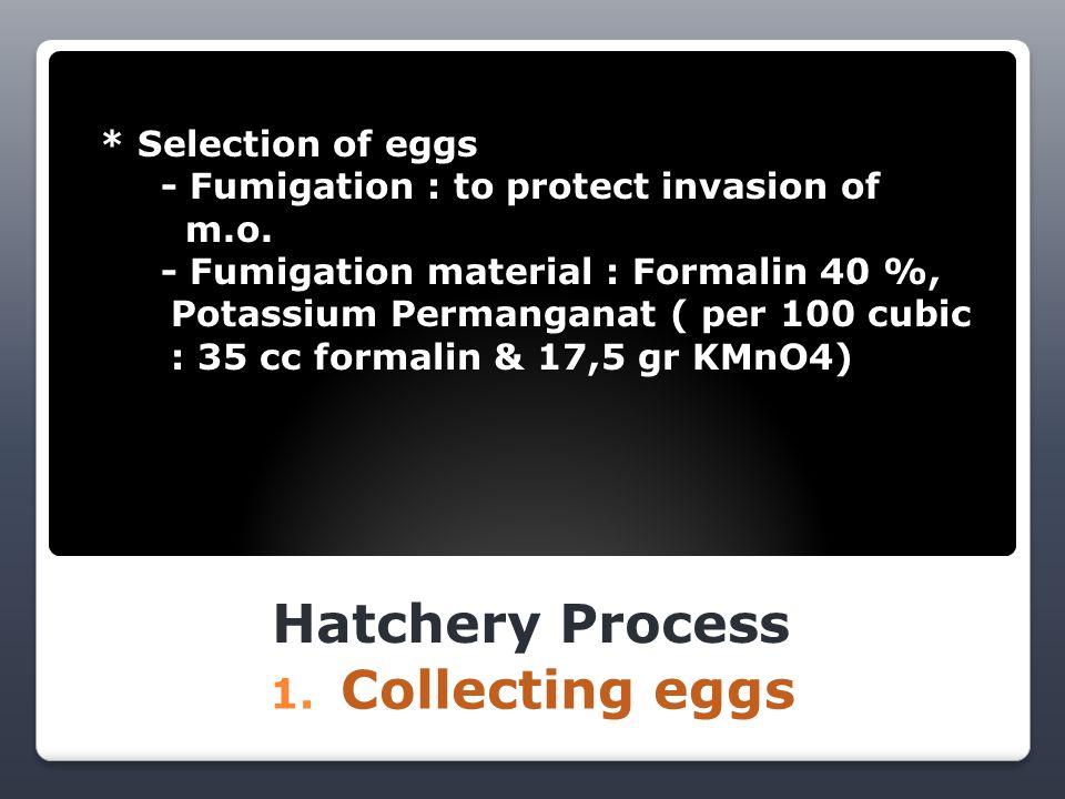 Hatchery Process 2.