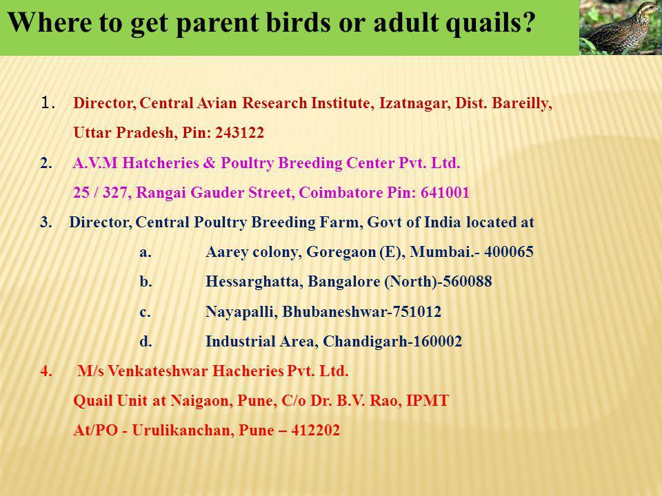 Where to get parent birds or adult quails? 1. Director, Central Avian Research Institute, Izatnagar, Dist. Bareilly, Uttar Pradesh, Pin: 243122 2. A.V