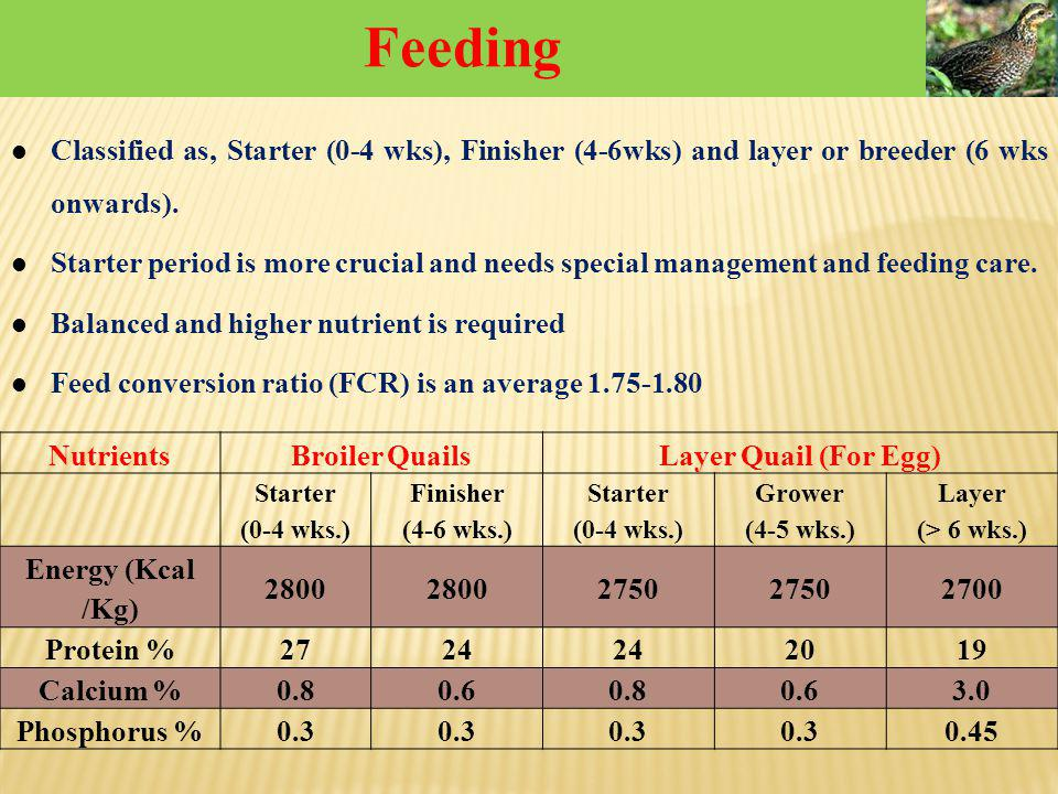 Classified as, Starter (0-4 wks), Finisher (4-6wks) and layer or breeder (6 wks onwards). Starter period is more crucial and needs special management
