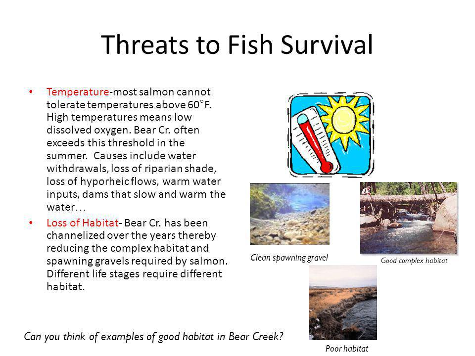 Threats to Fish Survival Temperature-most salmon cannot tolerate temperatures above 60°F.