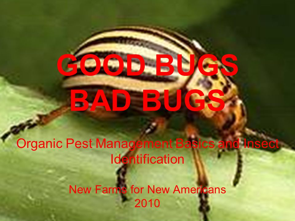 GOOD BUGS BAD BUGS Organic Pest Management Basics and Insect Identification New Farms for New Americans 2010