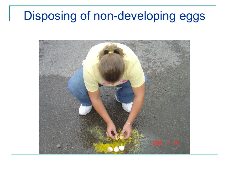 Disposing of non-developing eggs