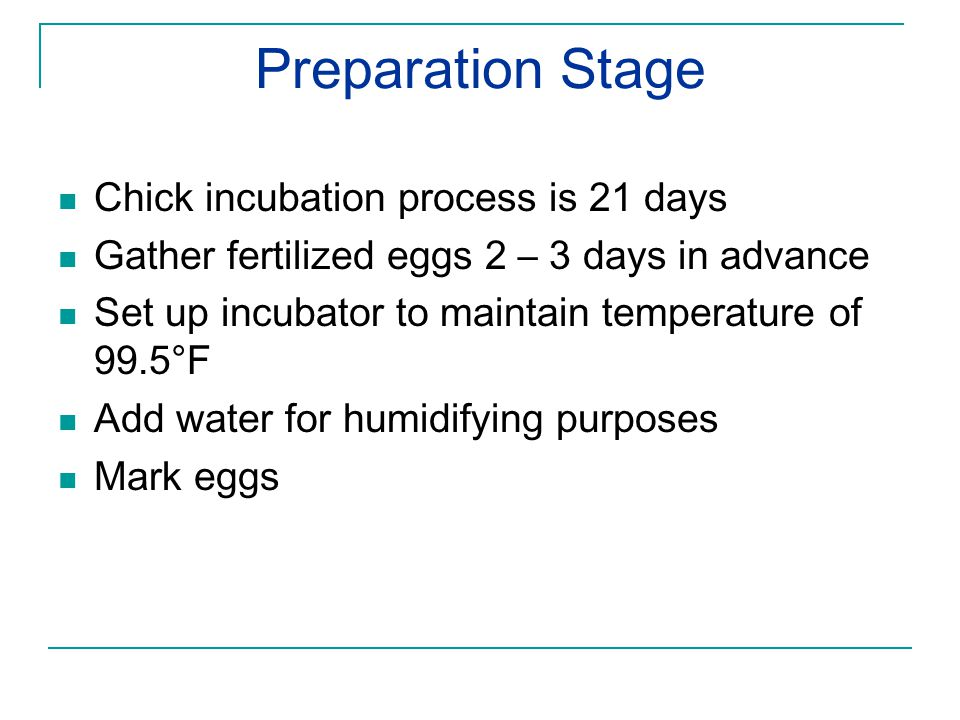 Preparation Stage Chick incubation process is 21 days Gather fertilized eggs 2 – 3 days in advance Set up incubator to maintain temperature of 99.5°F Add water for humidifying purposes Mark eggs