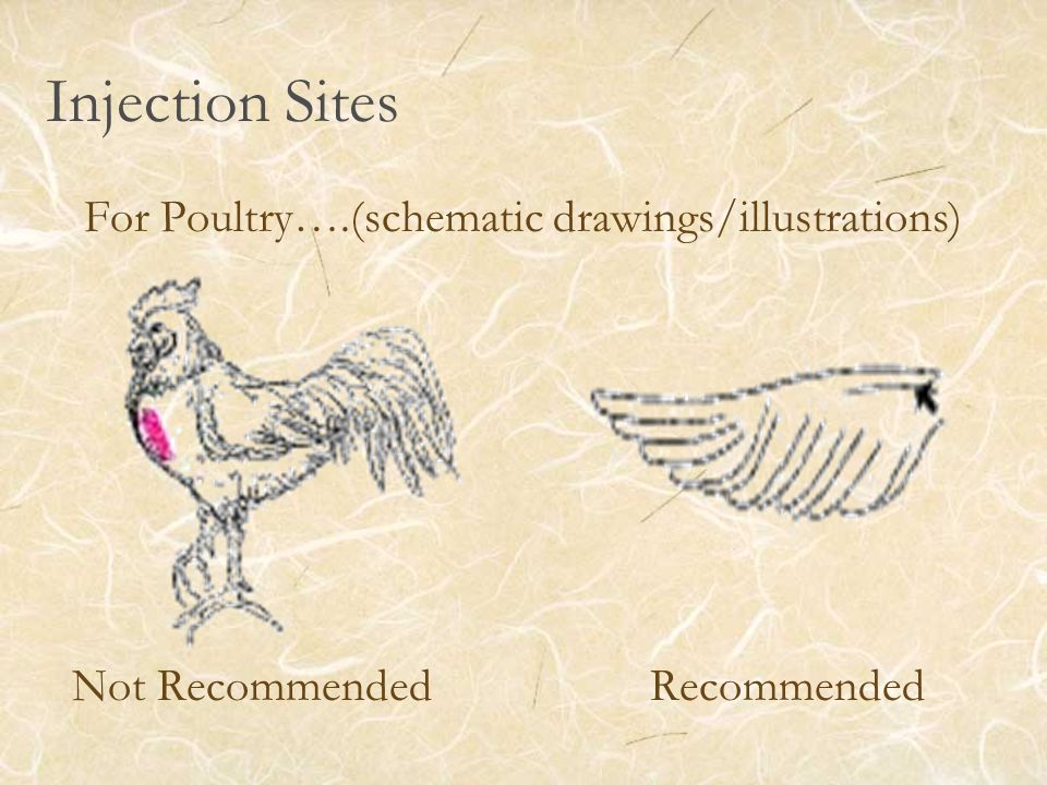 Injection Sites For Poultry….(schematic drawings/illustrations) Not Recommended Recommended