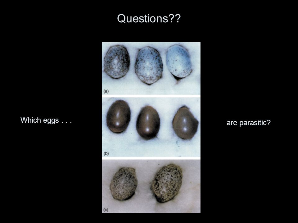 Questions?? Which eggs... are parasitic?