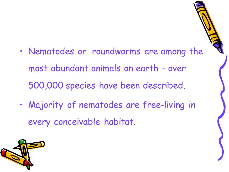 Characteristics of the Phylum Nematoda