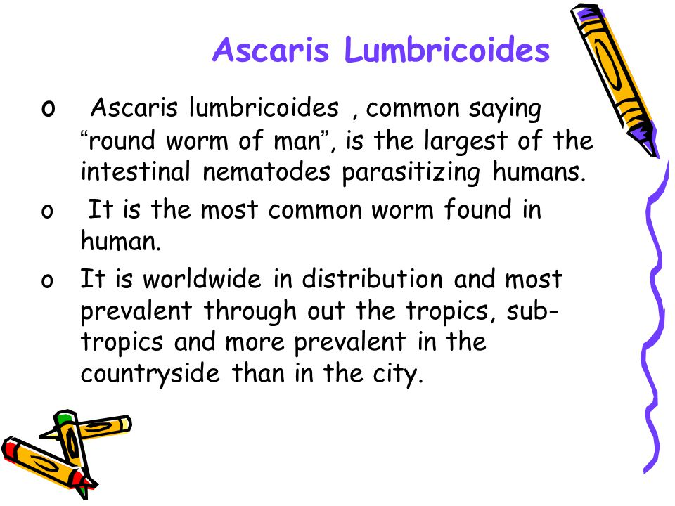 Ascaris Lumbricoides o Ascaris lumbricoides, common saying round worm of man, is the largest of the intestinal nematodes parasitizing humans. o It is