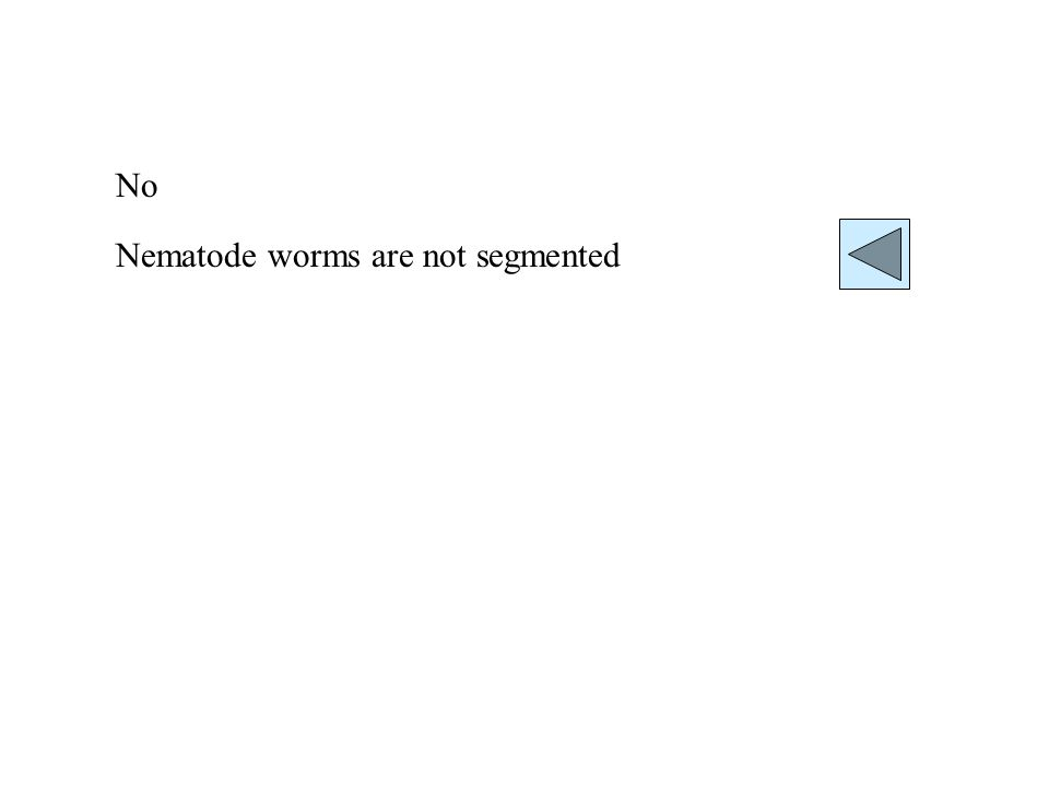 No Nematode worms are not segmented