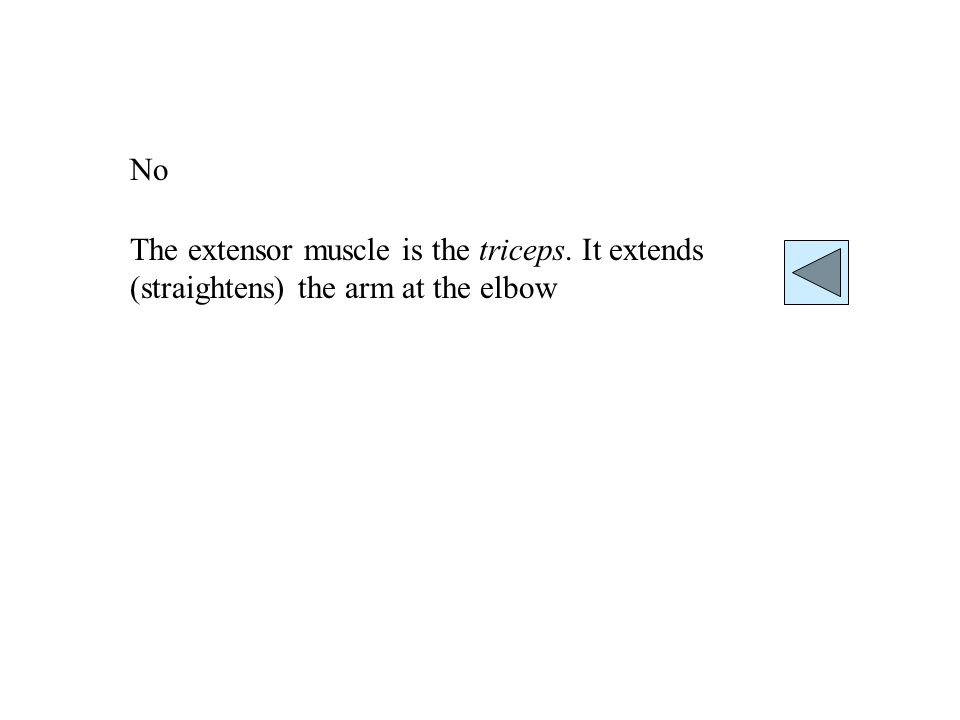 No The extensor muscle is the triceps. It extends (straightens) the arm at the elbow