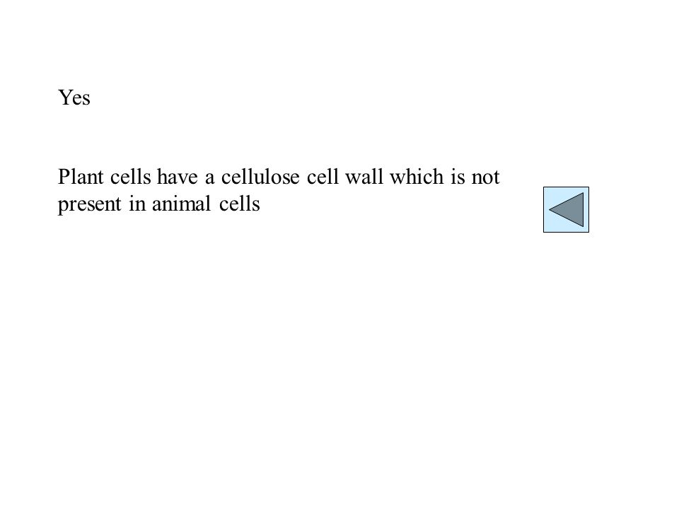 Yes Plant cells have a cellulose cell wall which is not present in animal cells