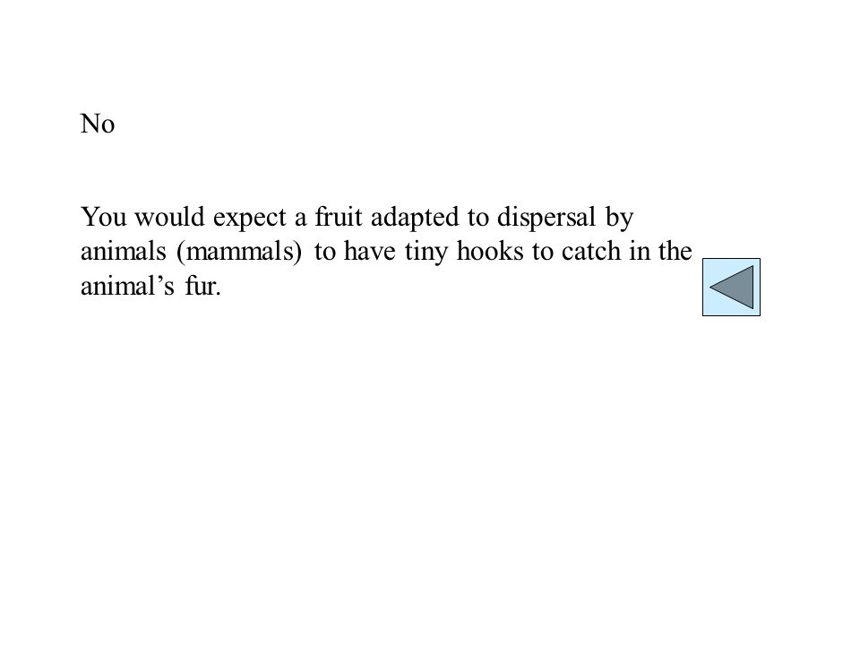 No You would expect a fruit adapted to dispersal by animals (mammals) to have tiny hooks to catch in the animals fur.