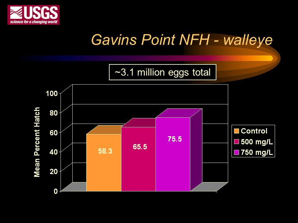 Gavins Point NFH - walleye ~3.1 million eggs total