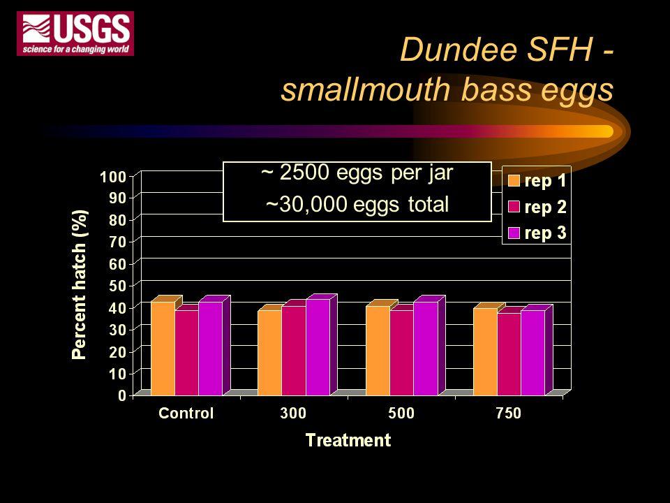 Dundee SFH - smallmouth bass eggs ~ 2500 eggs per jar ~30,000 eggs total