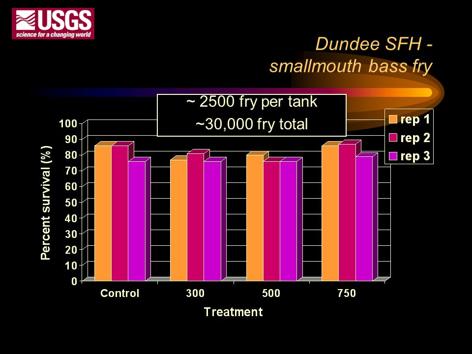 Dundee SFH - smallmouth bass fry ~ 2500 fry per tank ~30,000 fry total