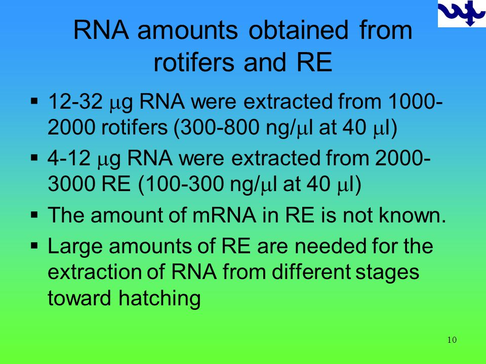 10 RNA amounts obtained from rotifers and RE 12-32 g RNA were extracted from 1000- 2000 rotifers (300-800 ng/ l at 40 l) 4-12 g RNA were extracted from 2000- 3000 RE (100-300 ng/ l at 40 l) The amount of mRNA in RE is not known.
