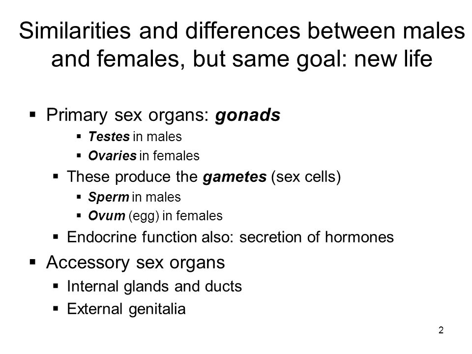 2 Similarities and differences between males and females, but same goal: new life Primary sex organs: gonads Testes in males Ovaries in females These
