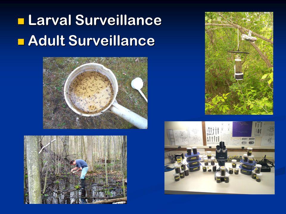 Larval Surveillance Larval Surveillance Adult Surveillance Adult Surveillance