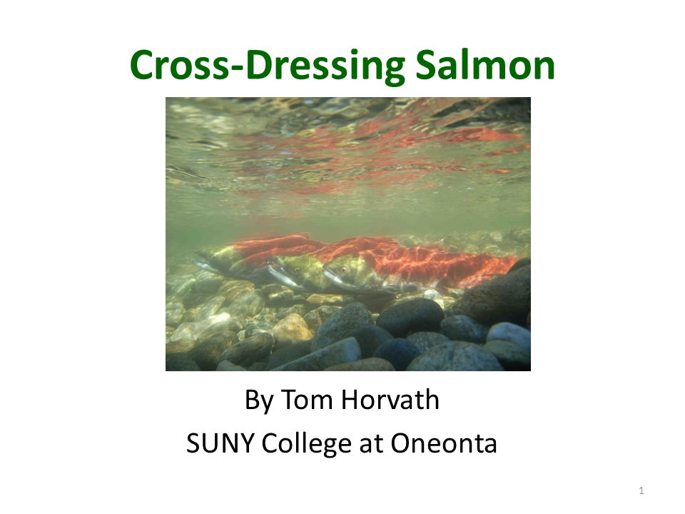 Cross-Dressing Salmon By Tom Horvath SUNY College at Oneonta 1