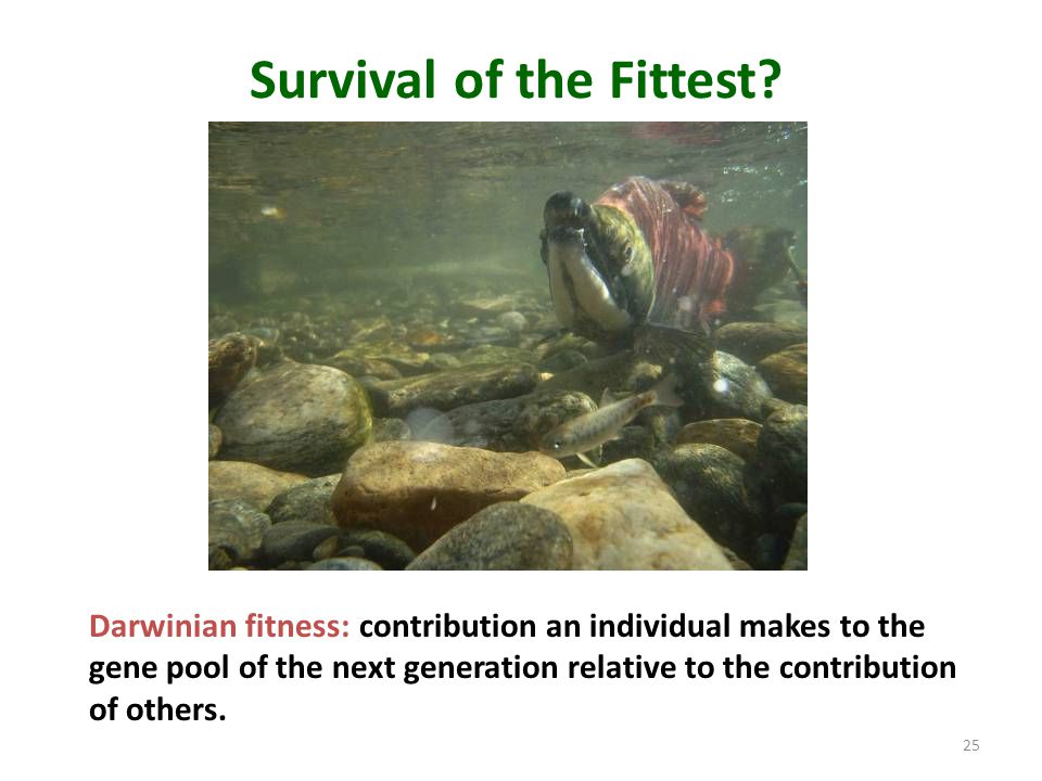 Survival of the Fittest? Darwinian fitness: contribution an individual makes to the gene pool of the next generation relative to the contribution of o
