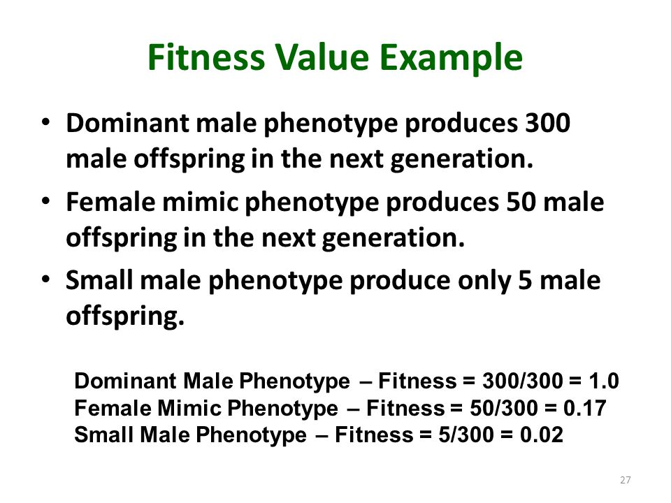 Fitness Value Example Dominant male phenotype produces 300 male offspring in the next generation. Female mimic phenotype produces 50 male offspring in