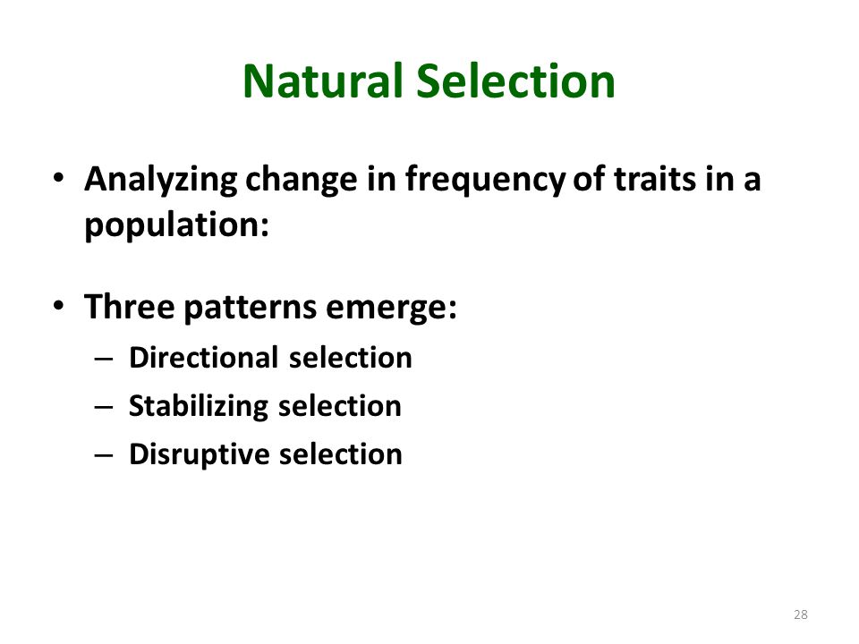 Natural Selection Analyzing change in frequency of traits in a population: Three patterns emerge: – Directional selection – Stabilizing selection – Di