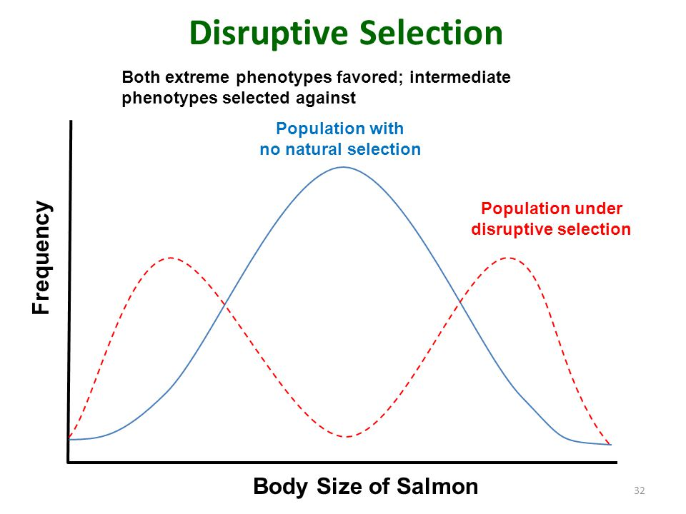 Disruptive Selection 32 Population with no natural selection Population under disruptive selection Body Size of Salmon Frequency Both extreme phenotyp