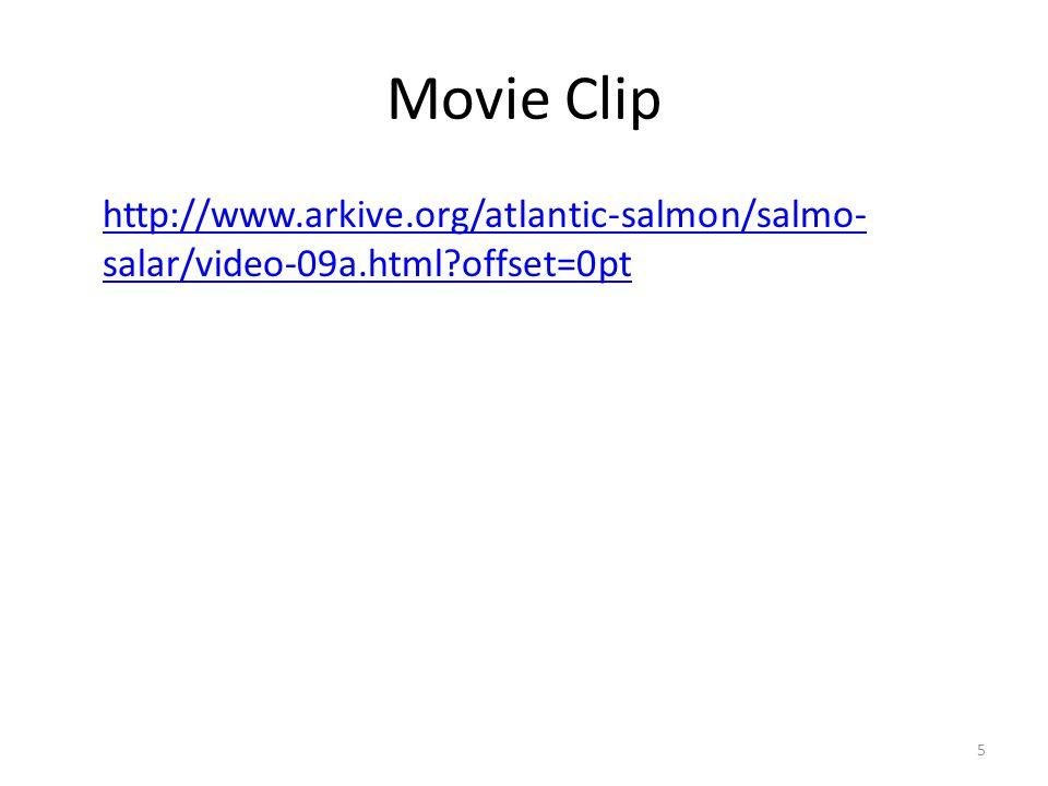 Slide Credits Slide 1, Slide 19, and Slide 24 Description: Spawning salmon.