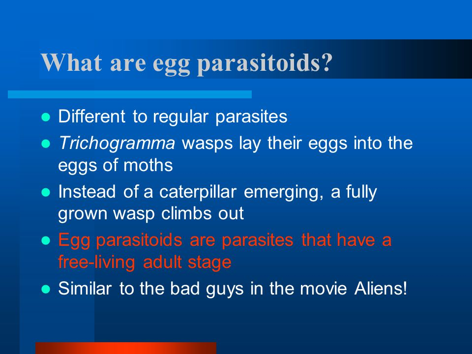 What are egg parasitoids? Different to regular parasites Trichogramma wasps lay their eggs into the eggs of moths Instead of a caterpillar emerging, a