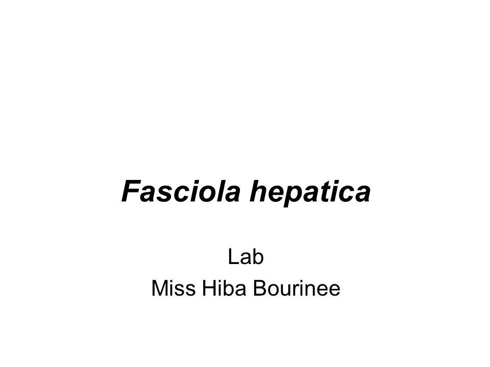 Fasciola hepatica Lab Miss Hiba Bourinee