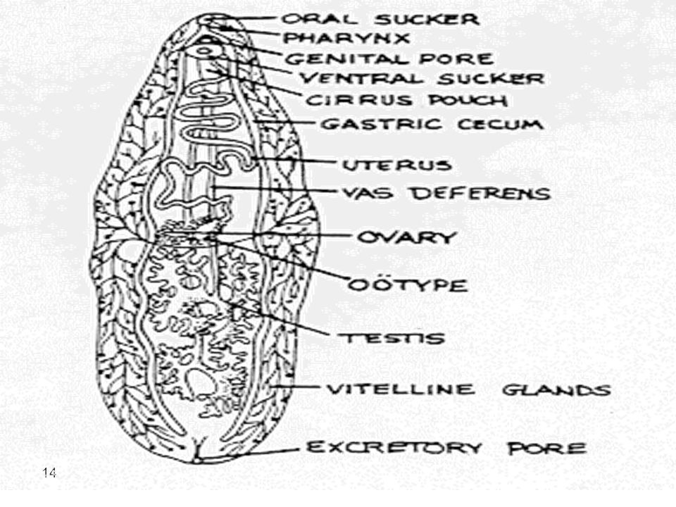 15 Pathology and clinical symptoms.