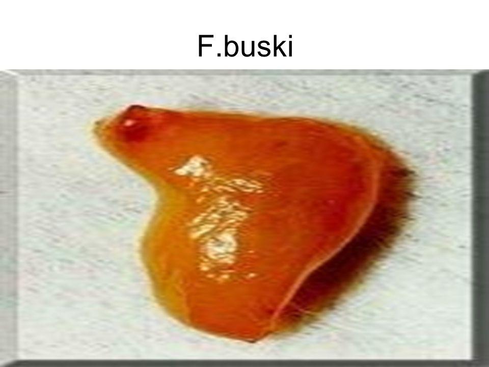 32 F.buski