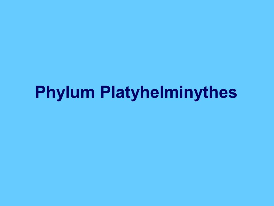 Platyhelminthes ~ 20,000 extant species Parasitic + free-living Unsegmented flatworms