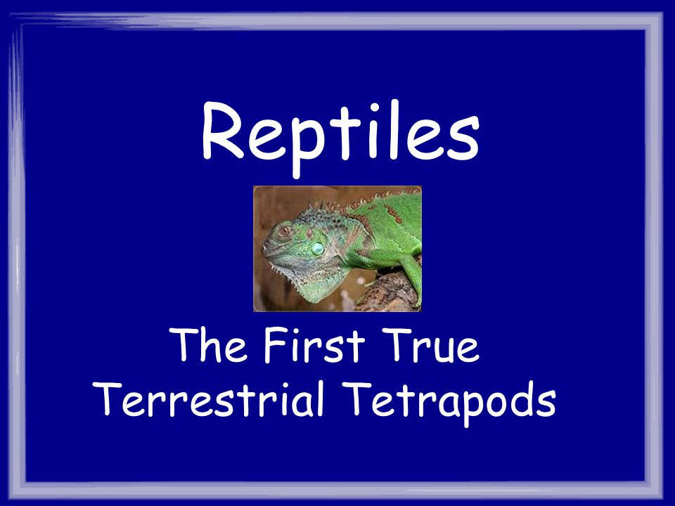 Reptiles The First True Terrestrial Tetrapods