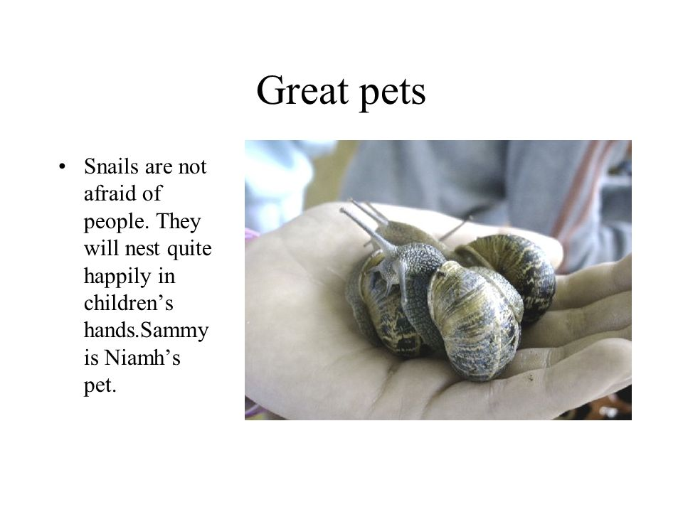 Great pets Snails are not afraid of people. They will nest quite happily in childrens hands.Sammy is Niamhs pet.