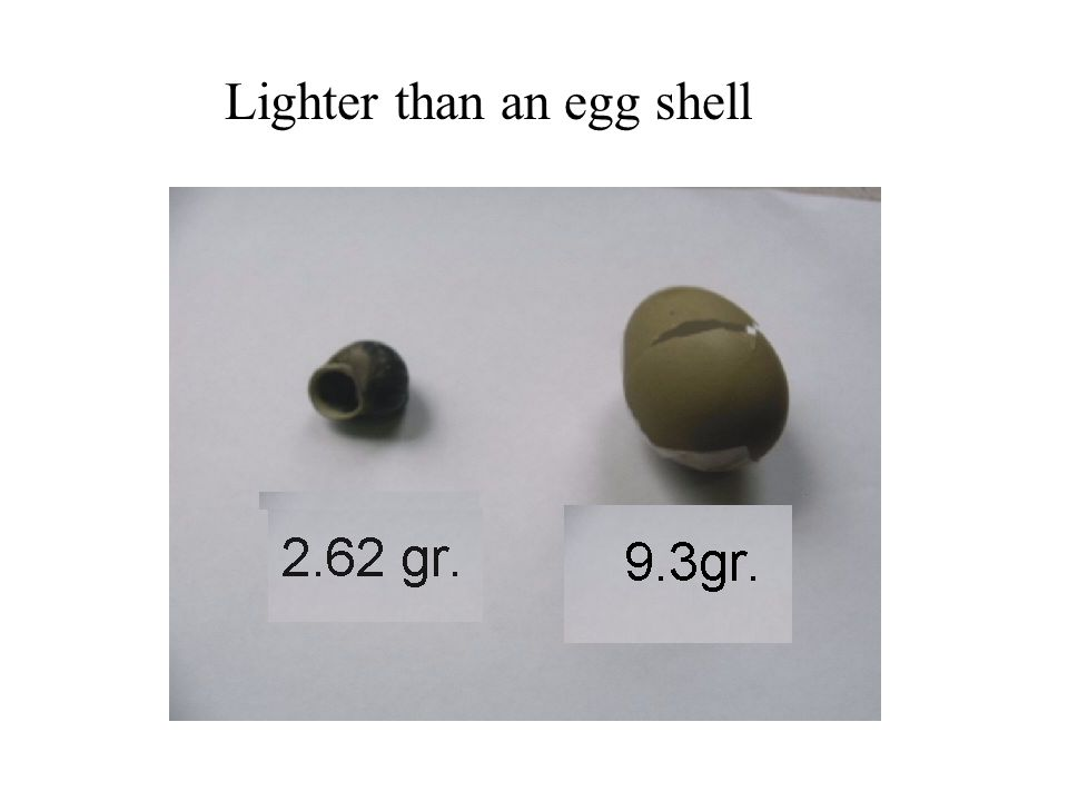 Lighter than an egg shell