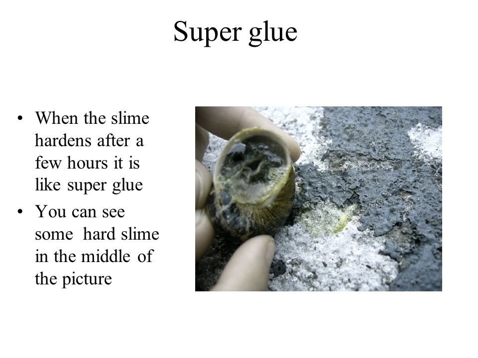 Super glue When the slime hardens after a few hours it is like super glue You can see some hard slime in the middle of the picture