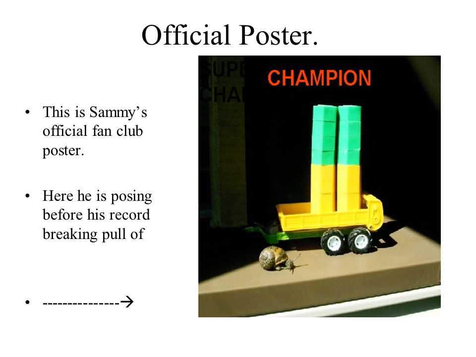 Official Poster. This is Sammys official fan club poster. Here he is posing before his record breaking pull of ---------------