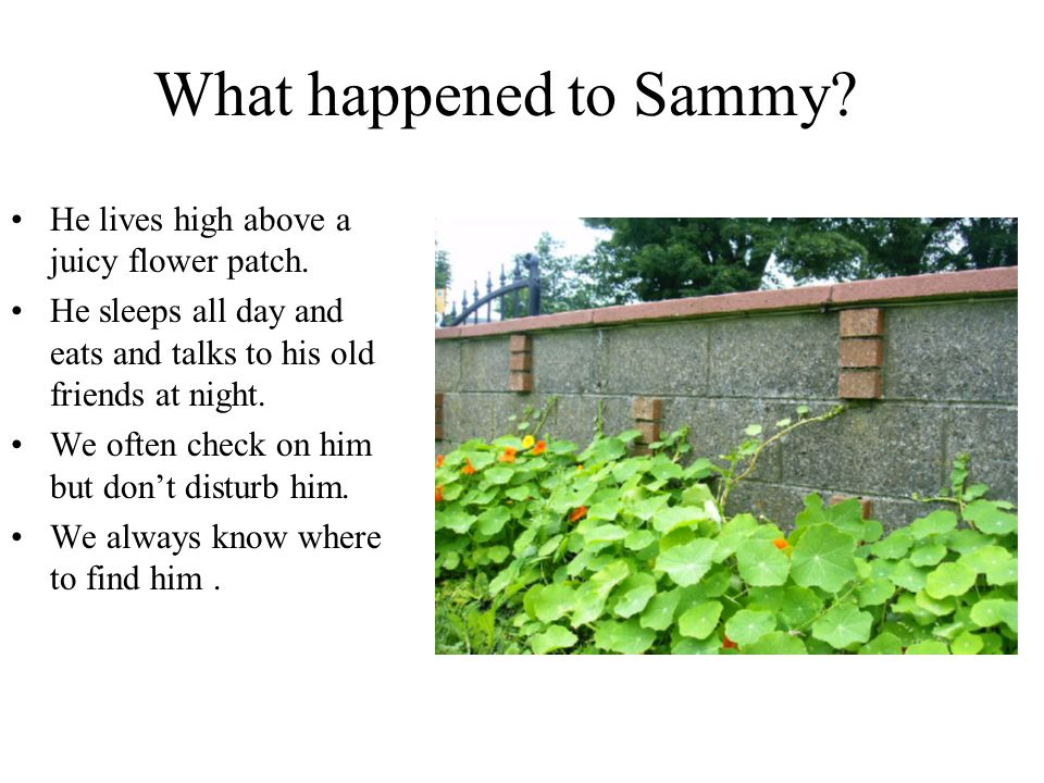 What happened to Sammy? He lives high above a juicy flower patch. He sleeps all day and eats and talks to his old friends at night. We often check on