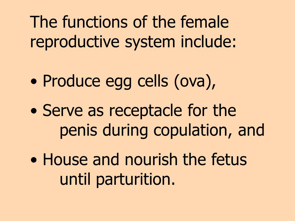 The functions of the female reproductive system include: Produce egg cells (ova), Serve as receptacle for the penis during copulation, and House and n