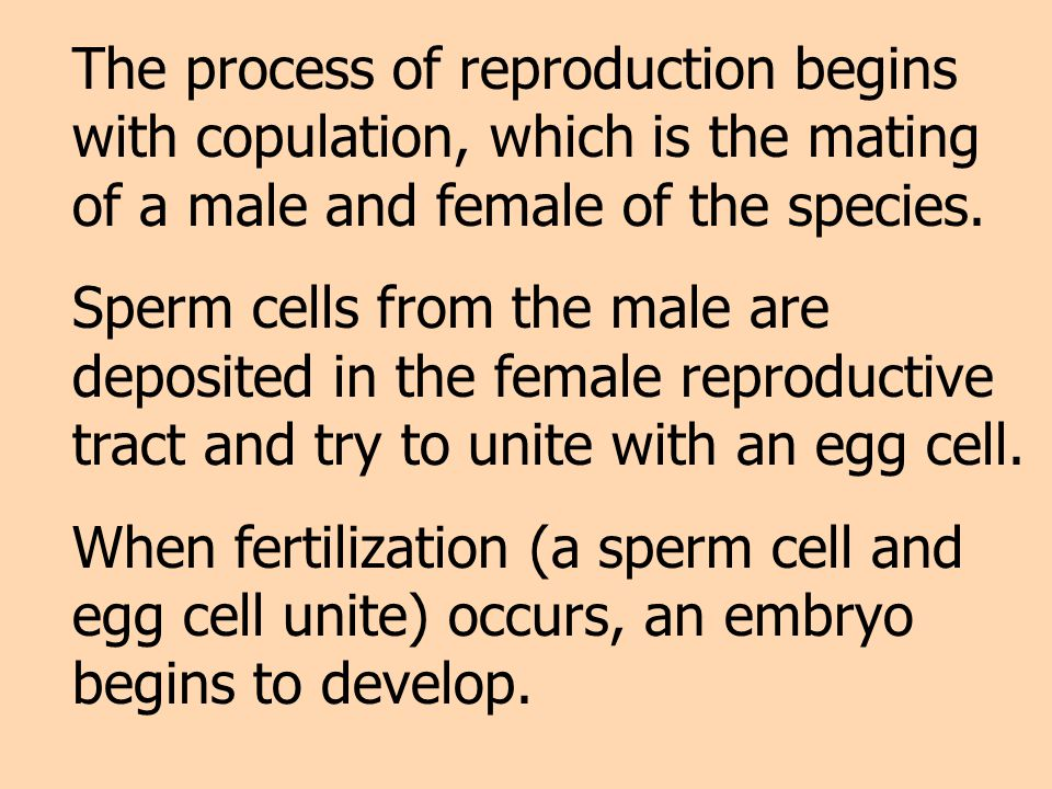 Fertilization – the union of the haploid sperm and the haploid ovum to form a diploid individual; the actual beginning of pregnancy.